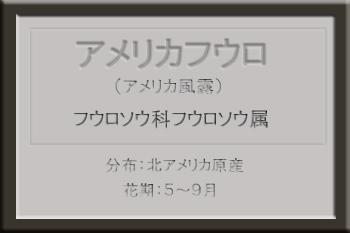 *アメリカフウロ_edited-1.jpg