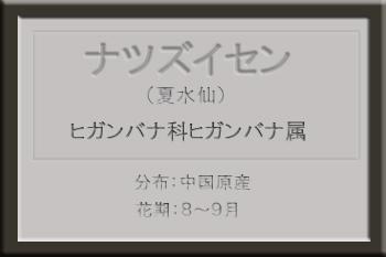 *ナツズイセン名札_edited-1.jpg