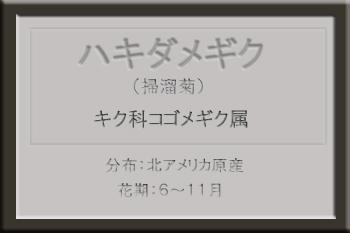 *ハキダメギク_edited-1.jpg