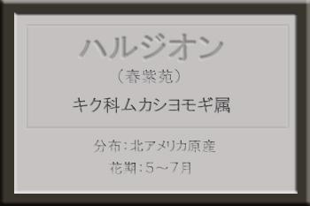 *ハルジオン名札_edited-1.jpg
