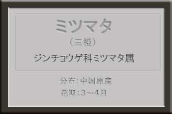 *ミツマタ名札_edited-1.jpg
