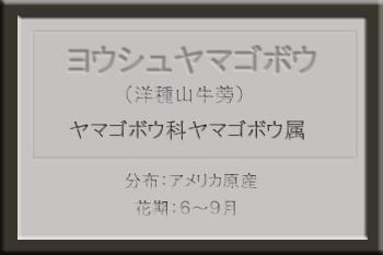 *ヨウシュヤマゴボウ名札_edited-1.jpg